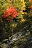 Es otoño en el Pirineo